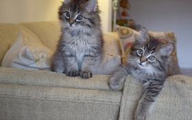 Обои подушки, котята, диван