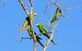 Обои попугай, клюв, небо, птица, хвост, дерево
