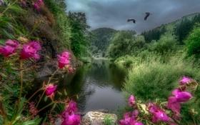 Обои камни, река, скалы, лес, птицы, деревья, журавли
