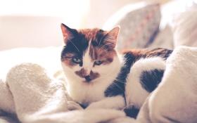 Обои кот, кровать, подушка, одеяло