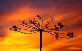 Картинка небо, облака, макро, растение, силуэт, зарево