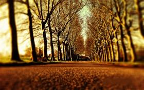 Обои дорога, деревья, дерево, дороги, аллея, аллеи, alley
