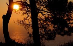 Обои море, небо, вода, солнце, свет, деревья, закат