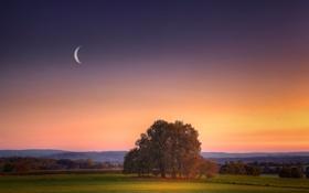Обои поле, закат, луна, вечер, місяць