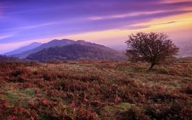 Картинка осень, закат, дерево