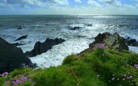 Картинка море, небо, трава, облака, цветы, скалы, растения