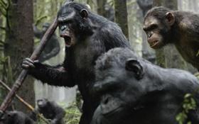 Картинка война, обезьяны, Революция, Dawn of the Planet of the Apes, Планета обезьян, цезарь