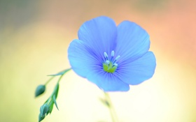 Картинка растение, цветок, лепестки