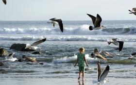 Картинка море, птицы, девочка