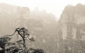 Обои горы, дерево, скалы, растительность, Китай