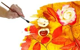 Картинка осень, цветок, листья, рука, кисть, жёлуди