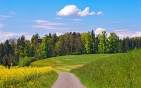 Обои дорога, облака, деревья, цветы, луг