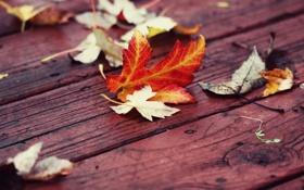 Обои осень, листья, доски, красные