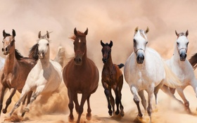 Обои кони, лошади, панорама, пыль, табун, аллюр, бег