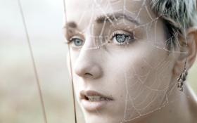 Картинка взгляд, паутина, fine art, Laura Zalenga