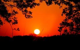 Картинка небо, солнце, деревья, закат, силуэт