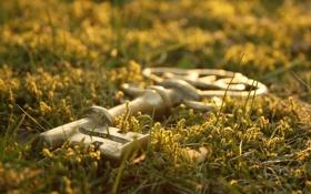 Обои трава, ключ, боке