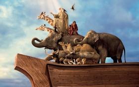 Обои животные, небо, птицы, человек, корабль, жирафы, обезьяны