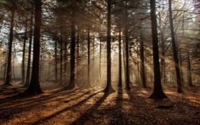 Картинка природа, лес, утро