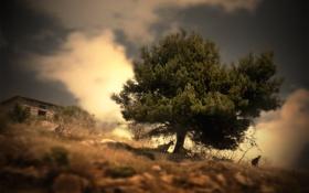Обои растения, пейзаж, животные, природа, дерево