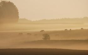 Обои природа, утро, поле, туман, кони