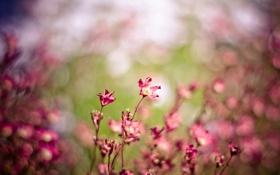 Картинка макро, цветы, красный