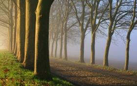 Обои дорога, деревья, природа, туман, утро