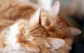 Обои кошки, уют, дом, фон