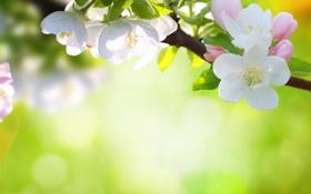Обои цветы, природа, дерево, весна, лепестки, боке