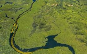 Картинка природа, река, болото, растения, вид с верху
