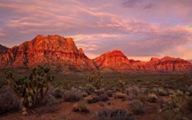 Обои горы, скалы, пустыня, Лас-Вегас, зарево, США, Невада