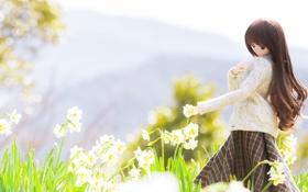 Обои цветы, весна, flowers, нарциссы, spring, куколка, doll