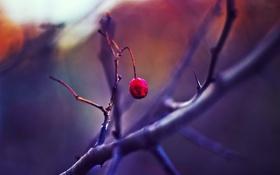 Обои зима, макро, одиночество, шиповник