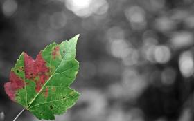 Картинка осень, блики, фон, серый, лист, макро