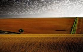 Картинка небо, облака, деревья, дерево, холмы, поля, вечер