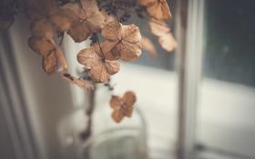 Обои цветы, лепестки, сухие