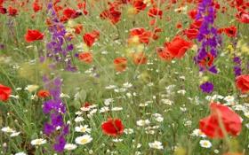 Обои зелень, цветы, природа, растительность