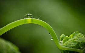 Картинка росток, капля, фон, жизнь, зелень, макро