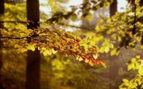 Картинка осень, лес, листья, свет, деревья, ветки, природа