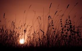 Картинка небо, трава, свет, природа