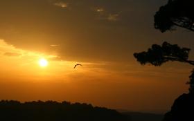 Обои море, солнце, пейзаж, природа, восход, дерево, чайка