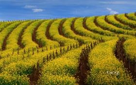 Картинка пейзаж, обои, небо, облака, поле, цветы