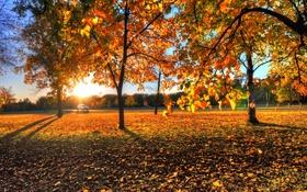 Картинка листья, осень, закат, деревья, рассвет, фото, природа