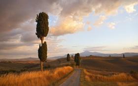 Обои дорога, деревья, холмы, просторы