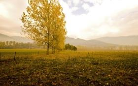Картинка поле, осень, пейзаж, горы, природа