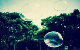Обои пузыри, пузырь, мыльный