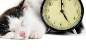 Обои кошка, белый, кот, черный, будильник, спит, белый фон