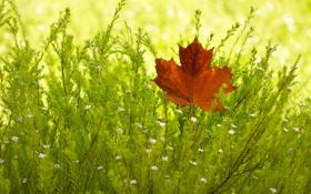 Обои осень, лист, куст
