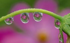 Обои капли, роса, растение, зелень, свежесть, цветок, стебель