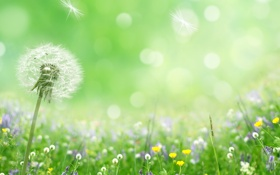 Обои природа, весна, боке, лепестки, цветы